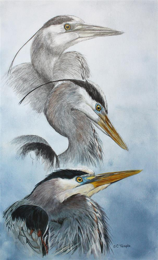 """""""Transformation - 3 Herons"""" original fine art by Catherine Temple"""