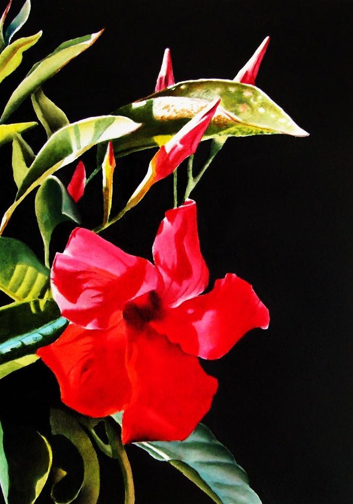 """""""Red Mandevilla"""" original fine art by Jacqueline Gnott, TWSA, WHS"""