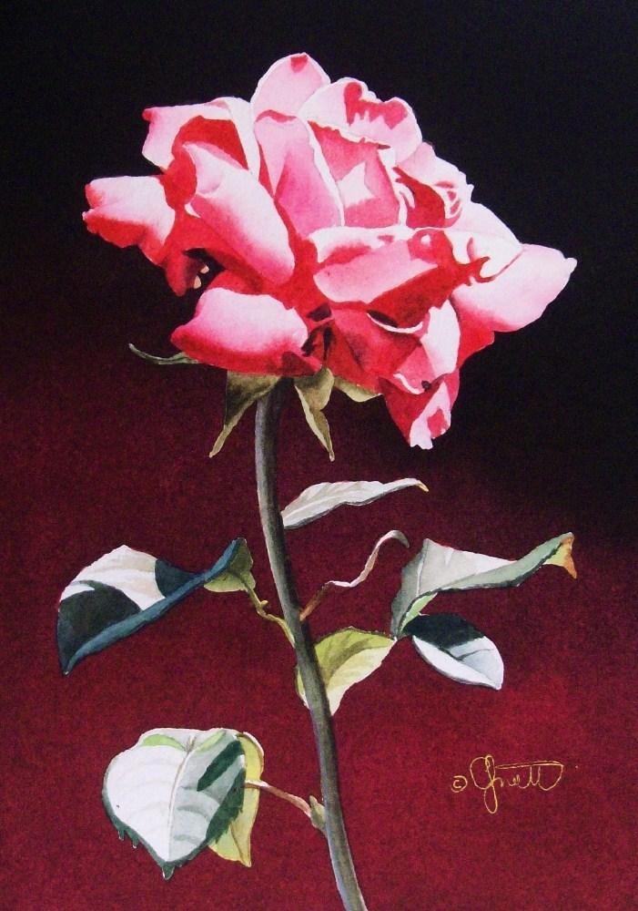 """Pink Rose with Gradation"" original fine art by Jacqueline Gnott, TWSA, WHS"