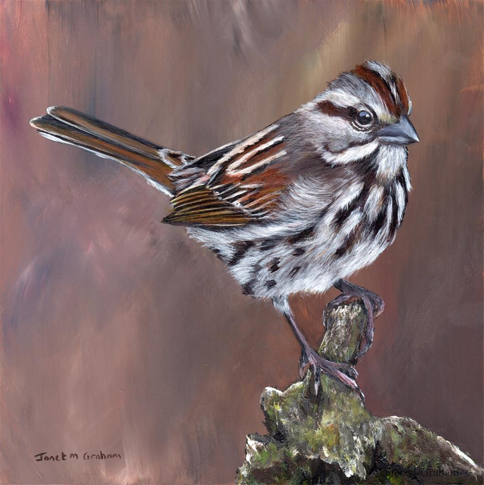 """Song Sparrow"" original fine art by Janet Graham"