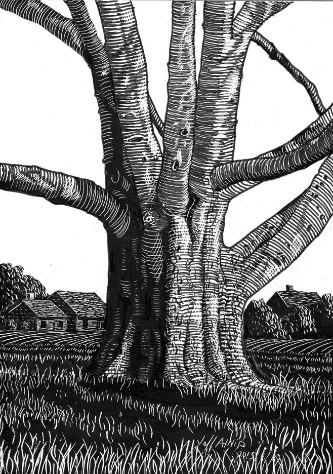 """Hackberry In The Field"" original fine art by Jeff Atnip"