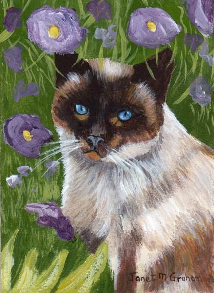 """Siamese Cat ACEO"" original fine art by Janet Graham"