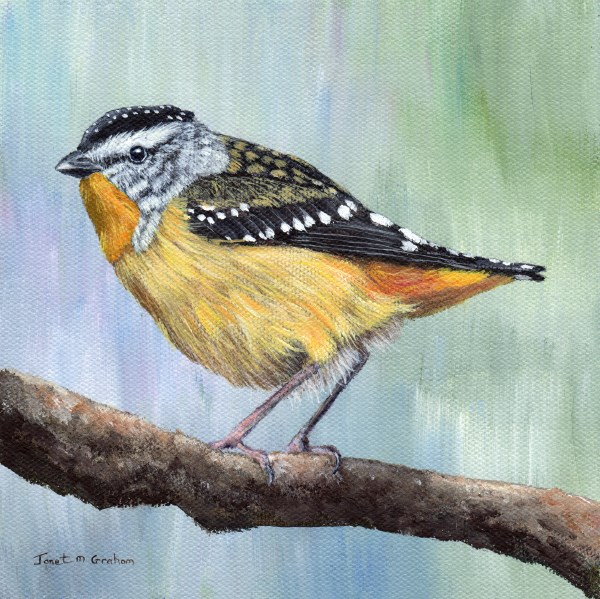 """""""Spotted Pardalote"""" original fine art by Janet Graham"""