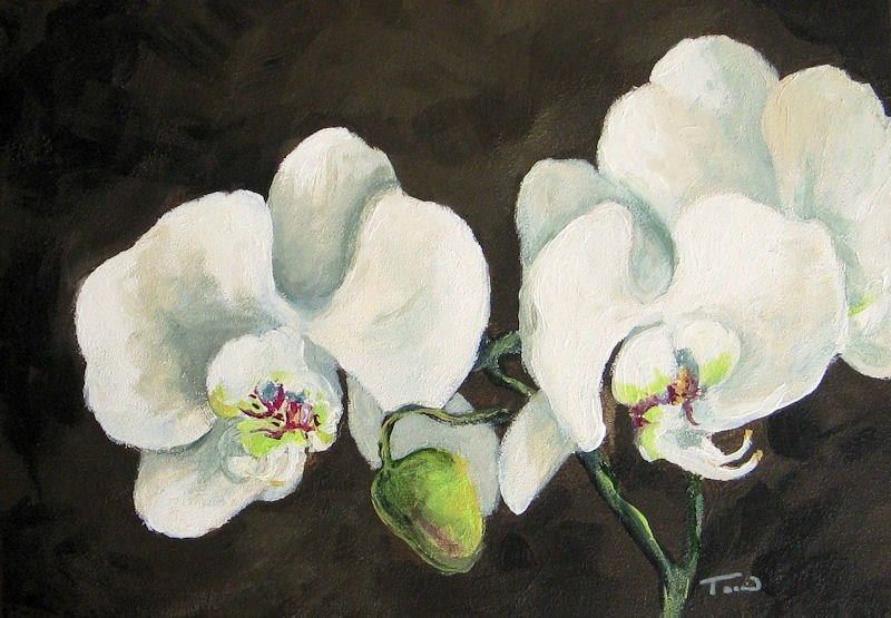 """""""My Orchid"""" original fine art by Torrie Smiley"""