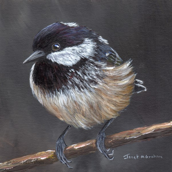 """Coal Tit No 4"" original fine art by Janet Graham"