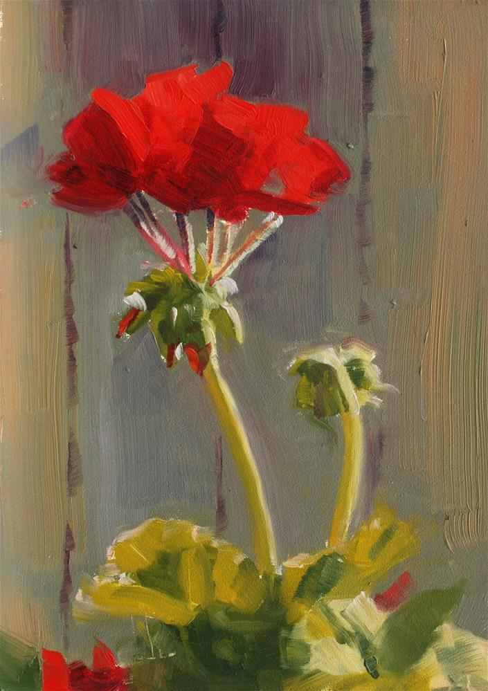 """Geraniums in the Afternoon Light"" original fine art by Susan McManamen"