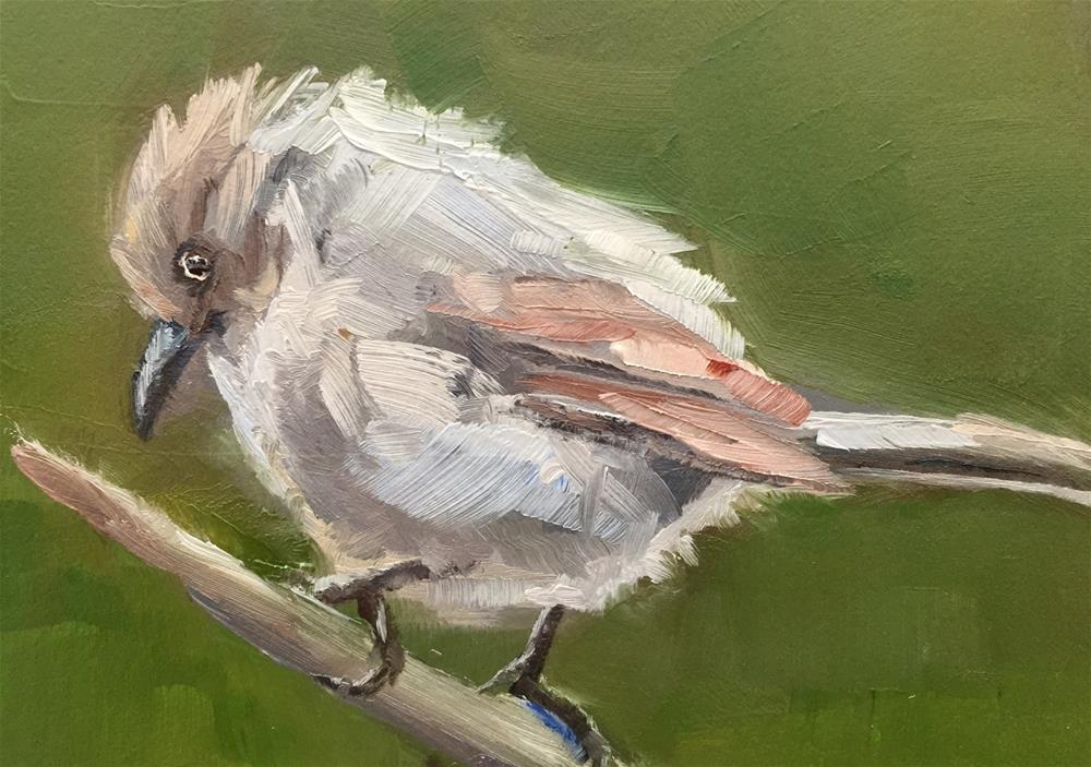 """Bushtit"" original fine art by Gary Bruton"