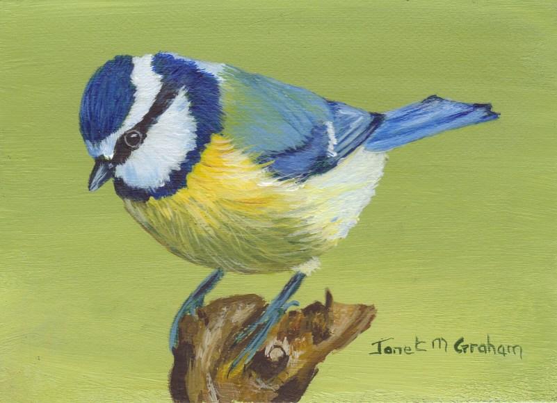 """""""Blue Tit ACEO"""" original fine art by Janet Graham"""