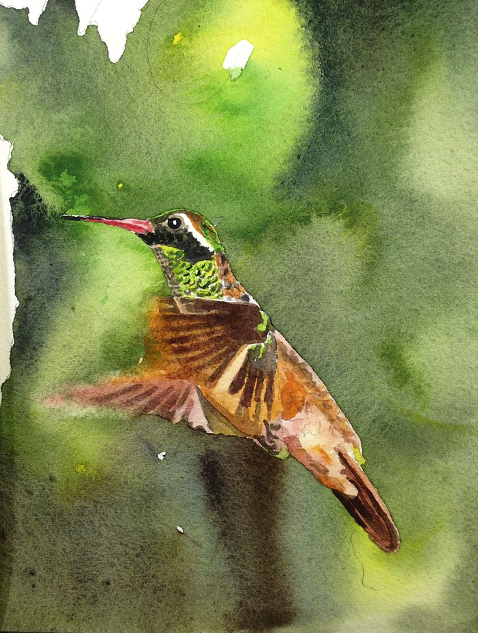 """""""X is for Xantus Hummingbird"""" original fine art by Andy Sewell"""