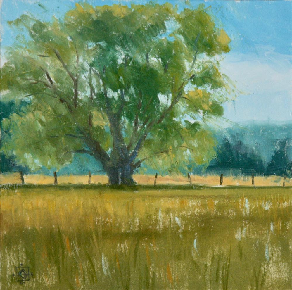 """Sunlit Willow"" original fine art by Carol Granger"