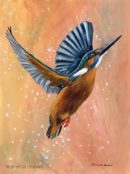 """Common Kingfisher"" original fine art by Janet Graham"