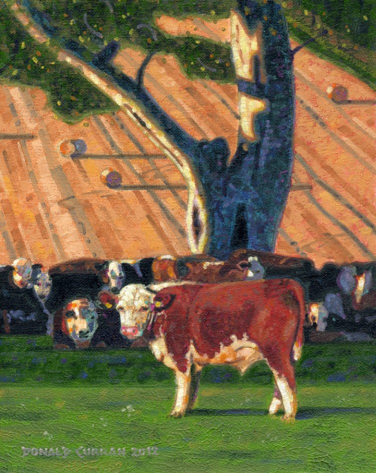 """Cows, Moooo!"" original fine art by Donald Curran"