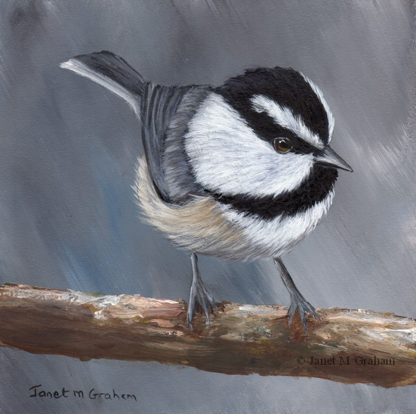 """Mountain Chickadee No 4"" original fine art by Janet Graham"
