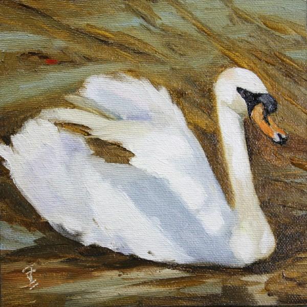 """""""Swan Swim"""" original fine art by Jane Frederick"""