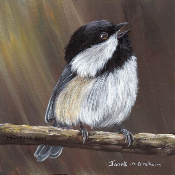 """""""Black Capped Chickadee No 13"""" original fine art by Janet Graham"""