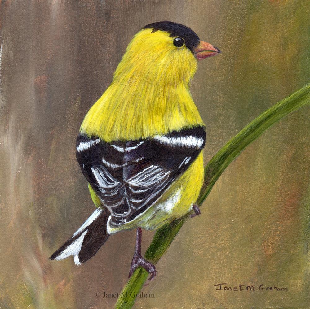 """American Goldfinch No 2"" original fine art by Janet Graham"