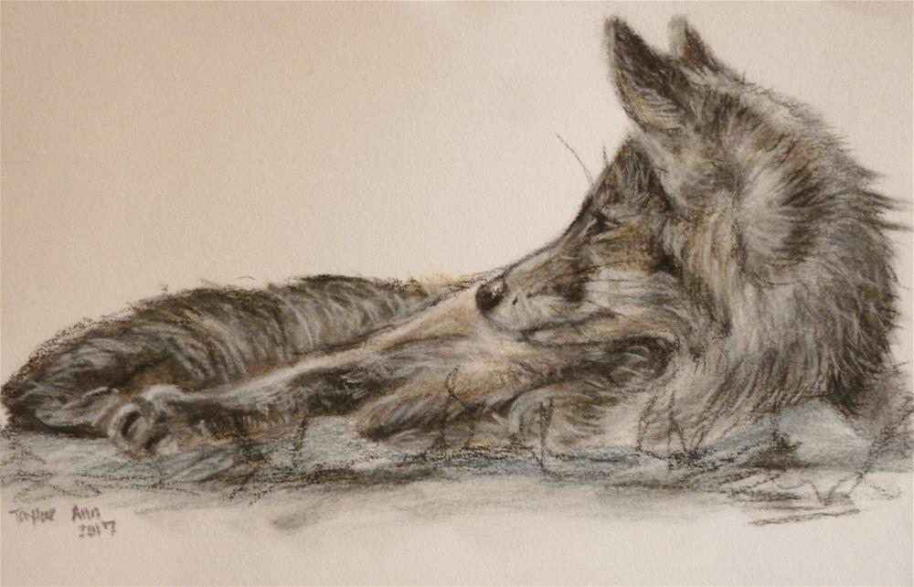 """Red Fox Study (Charcoal Study)"" original fine art by Taylor Ann"