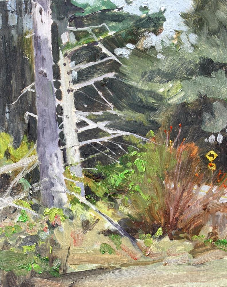 """Powerline Firs  plein air, landscape painting, by robin weiss"" original fine art by Robin Weiss"