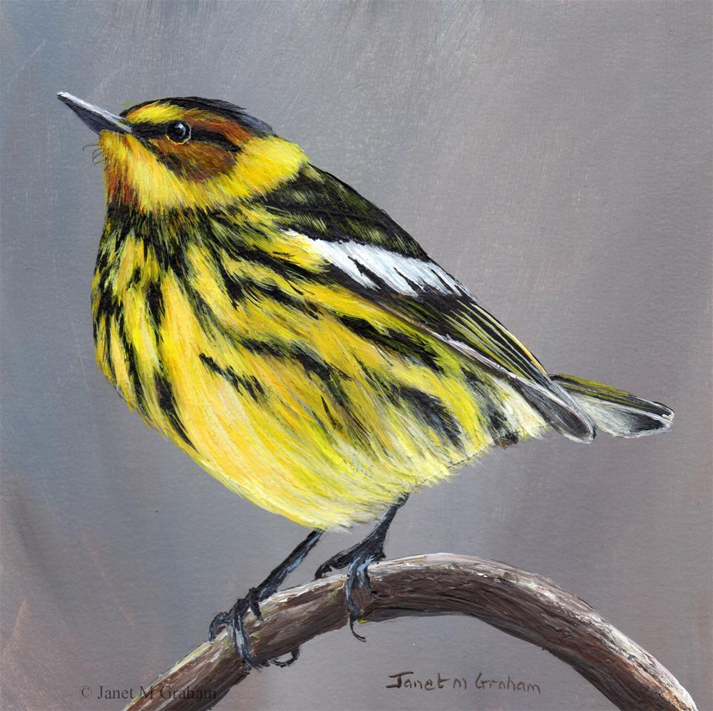 """Cape May Warbler No 2"" original fine art by Janet Graham"