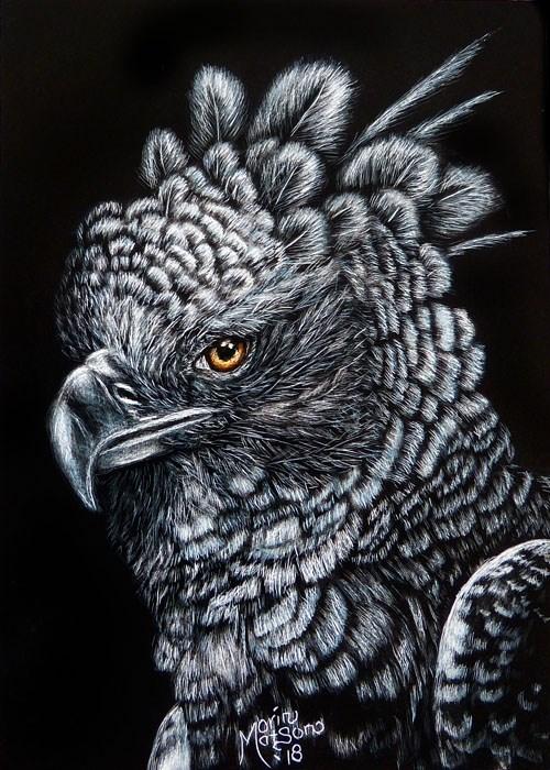 """Harpy Eagle"" original fine art by Monique Morin Matson"