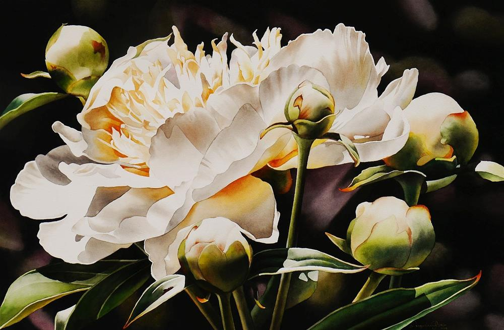 """""""White Peony with Buds"""" original fine art by Jacqueline Gnott, TWSA, WHS"""