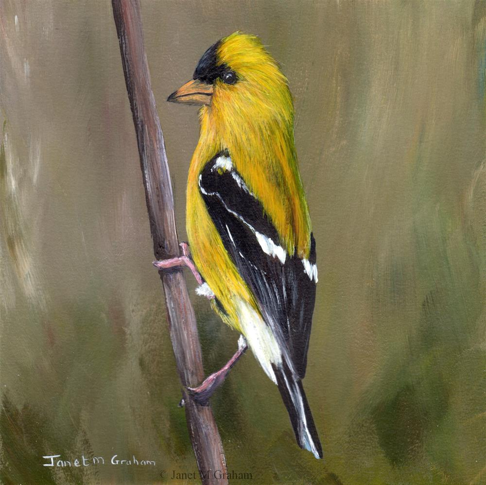 """American Goldfinch No 3"" original fine art by Janet Graham"