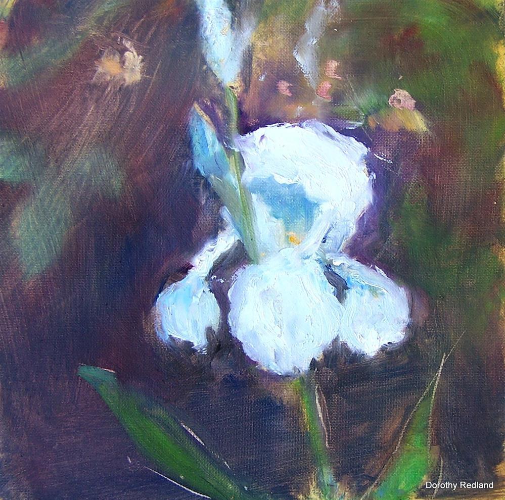 """""""Iris"""" original fine art by Dorothy Redland"""