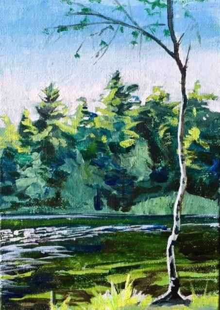 """""""Little Cedar"""" original fine art by Lauren Kuhn"""