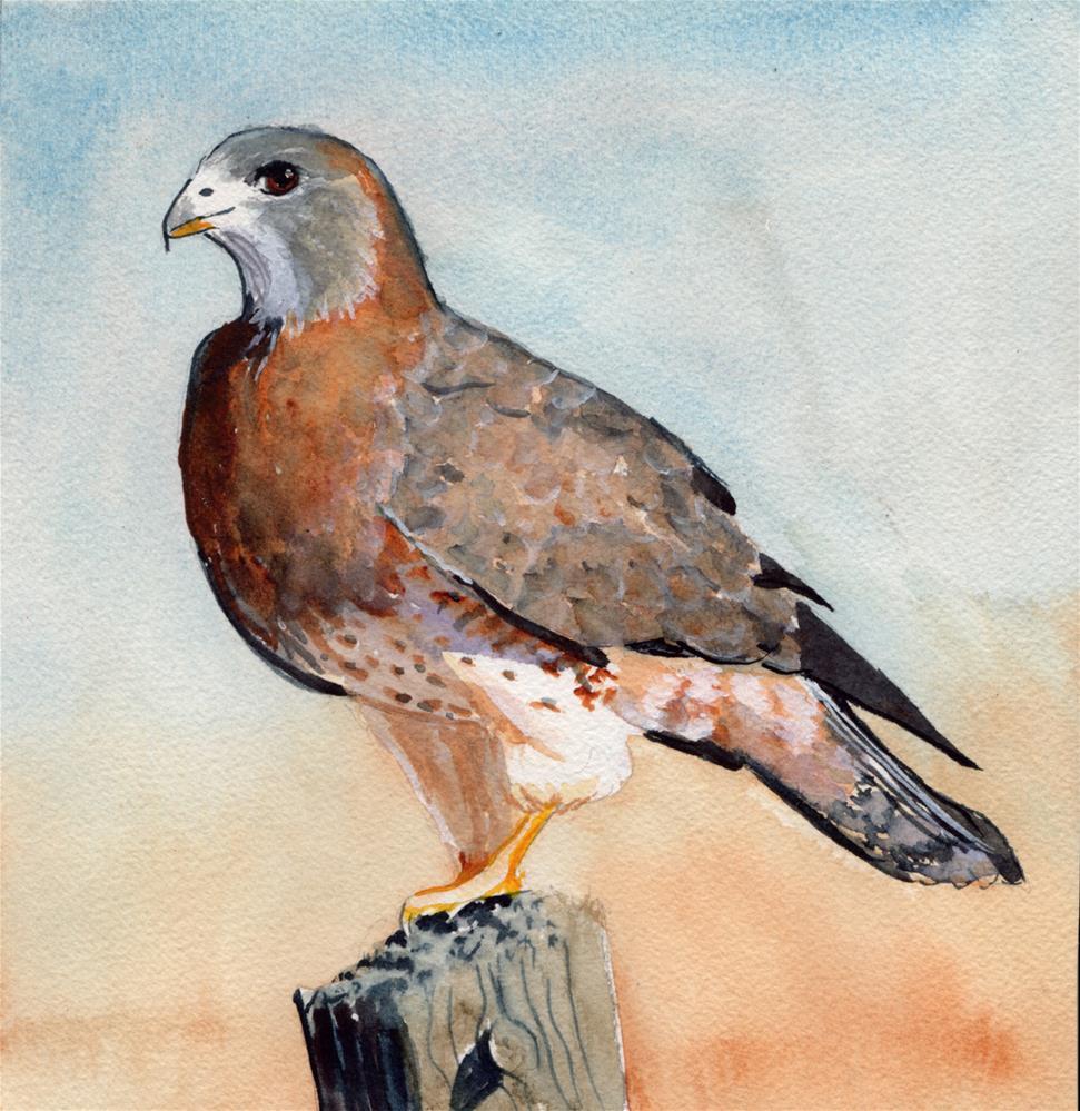 """""""Hawk #2"""" original fine art by Bunny Griffeth"""