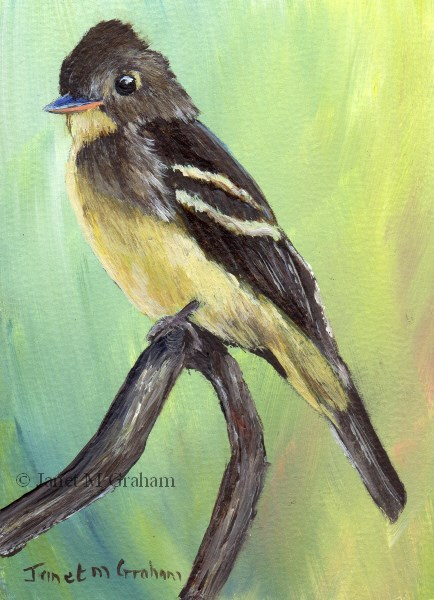 """Eastern Wood Pewee ACEO"" original fine art by Janet Graham"