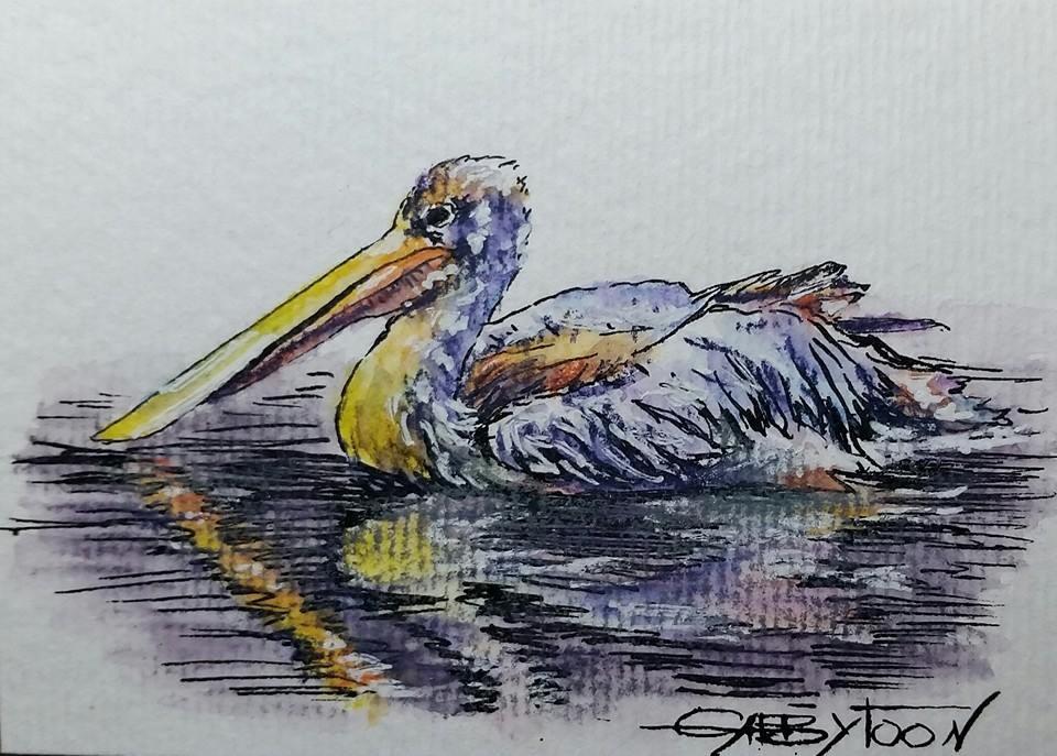 """Pelican(ACEO)"" original fine art by Gabriella DeLamater"