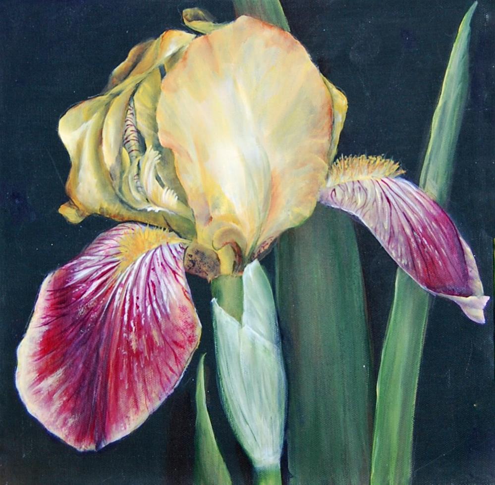 """""""Iris """" original fine art by Maureen Baker"""