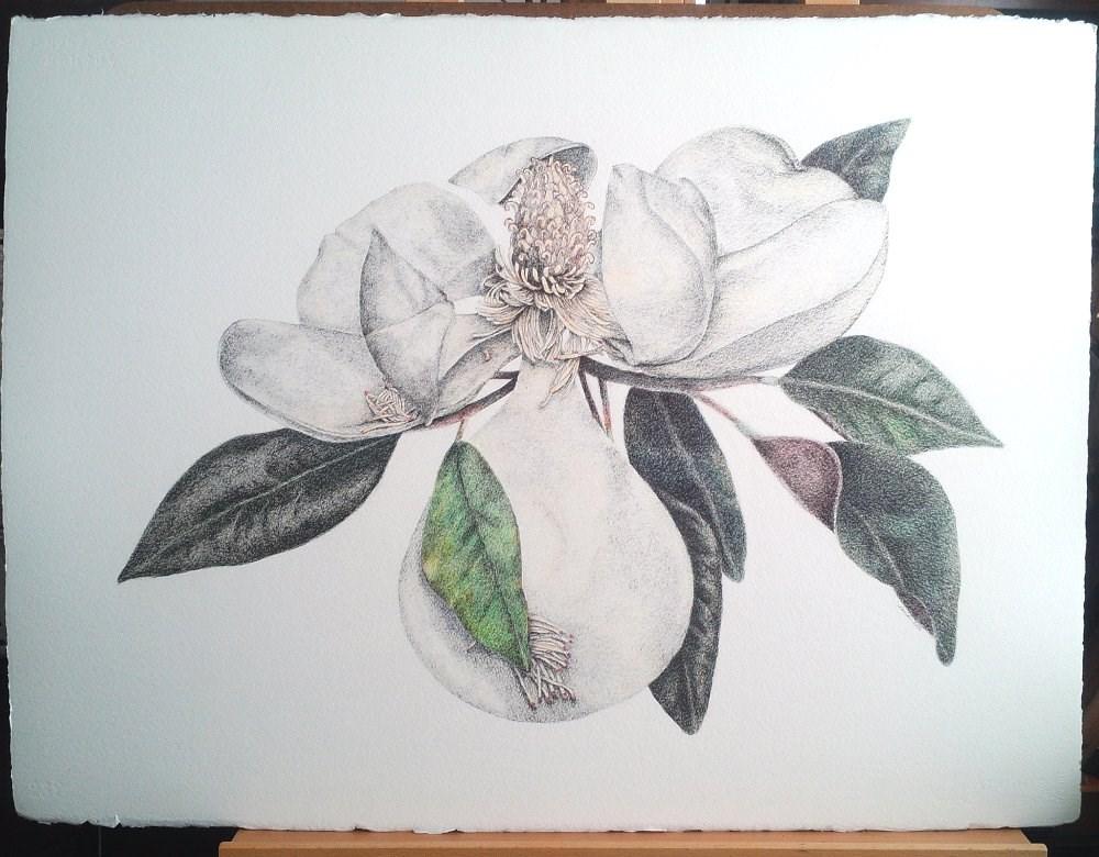 """Magnolia Flower"" original fine art by Camille Morgan"