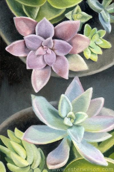 """Succulent Dish"" original fine art by Ester Wilson"