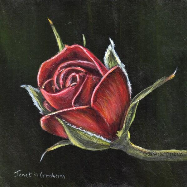 """Red Rose 2"" original fine art by Janet Graham"
