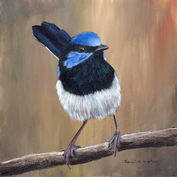 """Superb Fairy Wren No 6"" original fine art by Janet Graham"