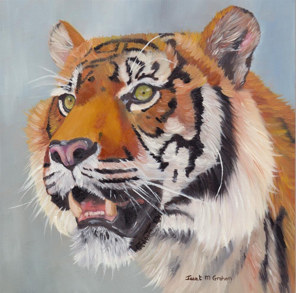 """Tiger"" original fine art by Janet Graham"