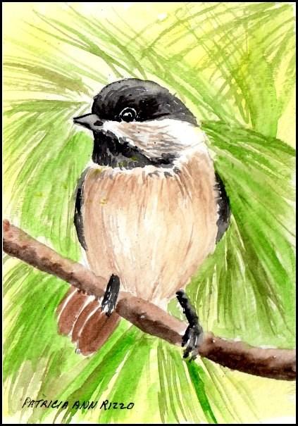 """""""Chickadee in the Pines"""" original fine art by Patricia Ann Rizzo"""