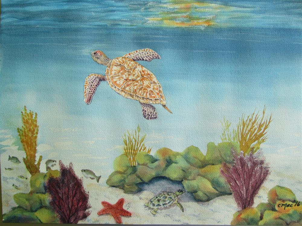 """Bahamas Turtles"" original fine art by Chris MacCormack"