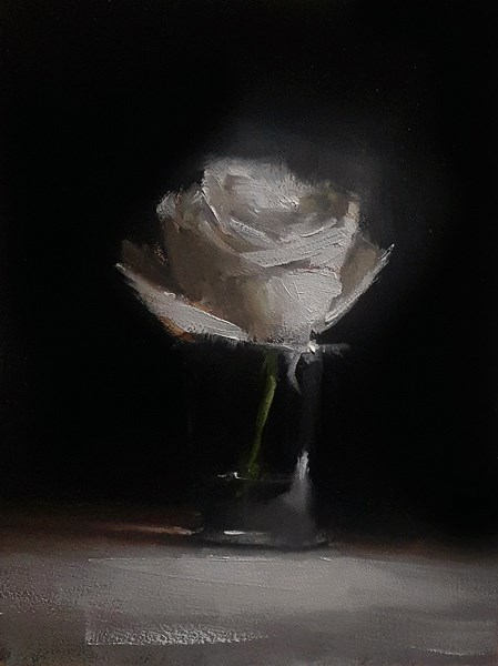 """White Rose"" original fine art by Neil Carroll"