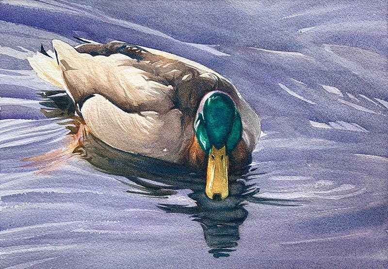 """""""Mr. Mallard: 9x13 watercolour on paper"""" original fine art by Ken Faulks"""