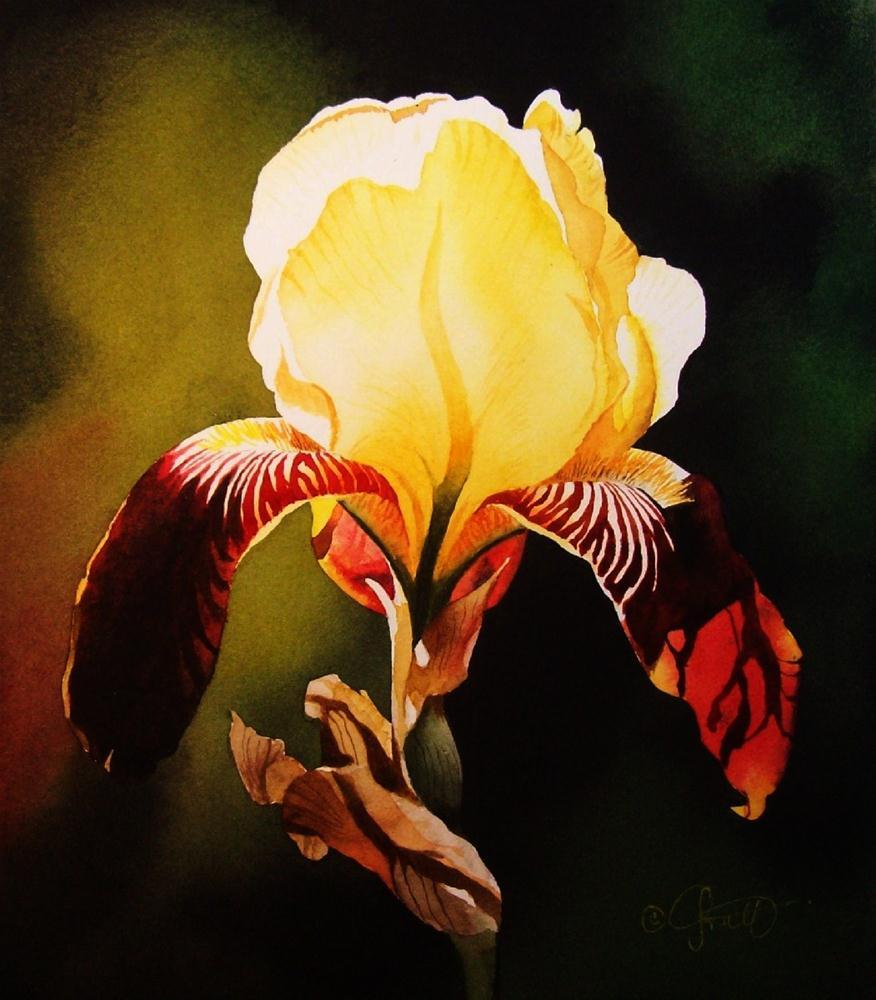 """Yellow & Burgundy Iris"" original fine art by Jacqueline Gnott, TWSA, WHS"