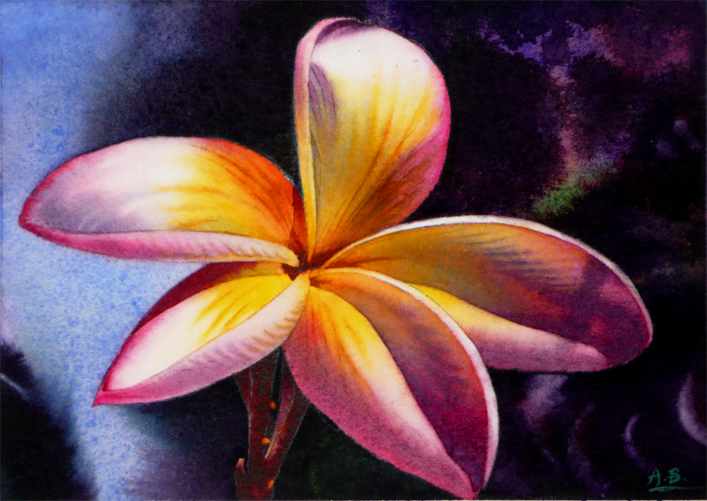 """Plumeria II (Version II)"" original fine art by Arena Shawn"