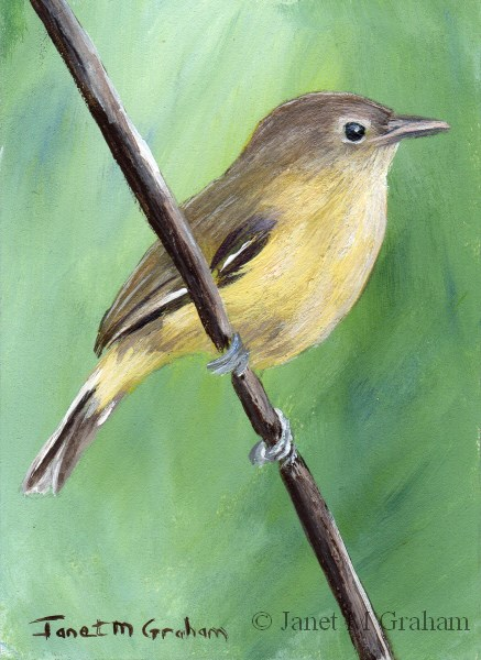 """""""Bell's Vireo ACEO"""" original fine art by Janet Graham"""