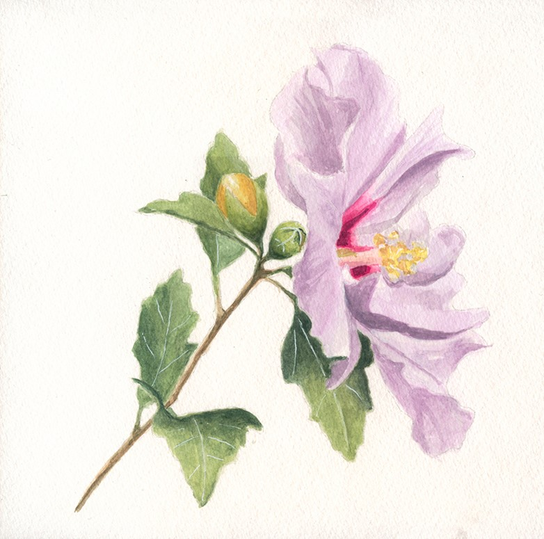 """""""Hibiscus flower watercolor painting"""" original fine art by Ria Hills"""