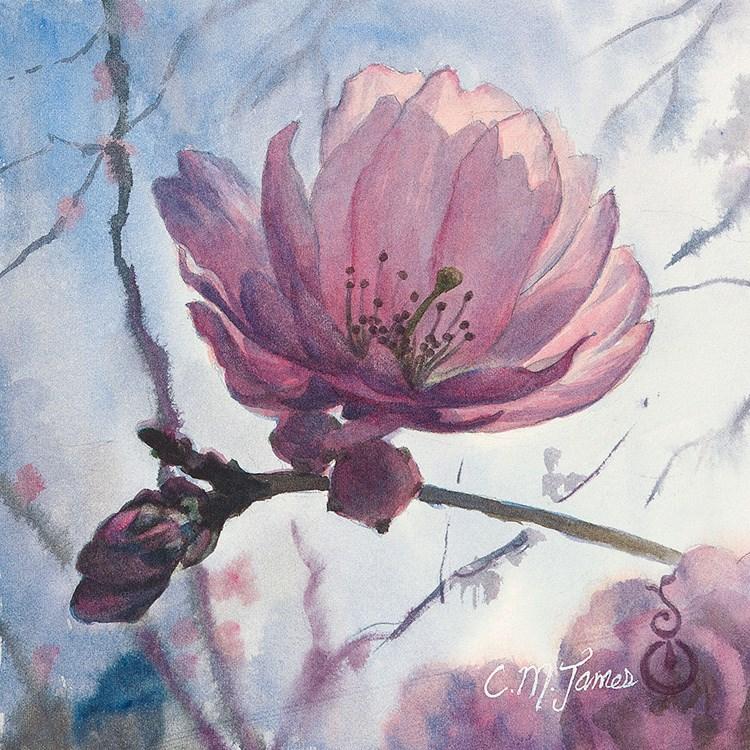 """Cherry Blossom Solo"" original fine art by Catherine M. James"