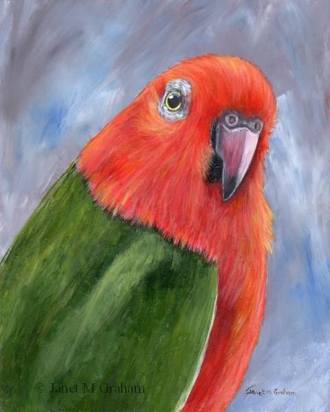 """King Parrot"" original fine art by Janet Graham"