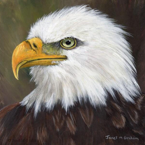 """Bald Eagle"" original fine art by Janet Graham"