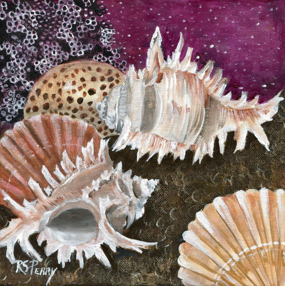 """seashells, barnicles, tiger cowrie, murex, scallop"" original fine art by R. S. Perry"