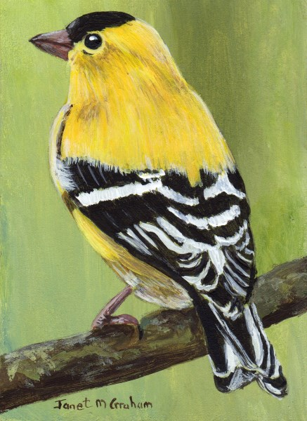 """""""American Goldfinch ACEO"""" original fine art by Janet Graham"""